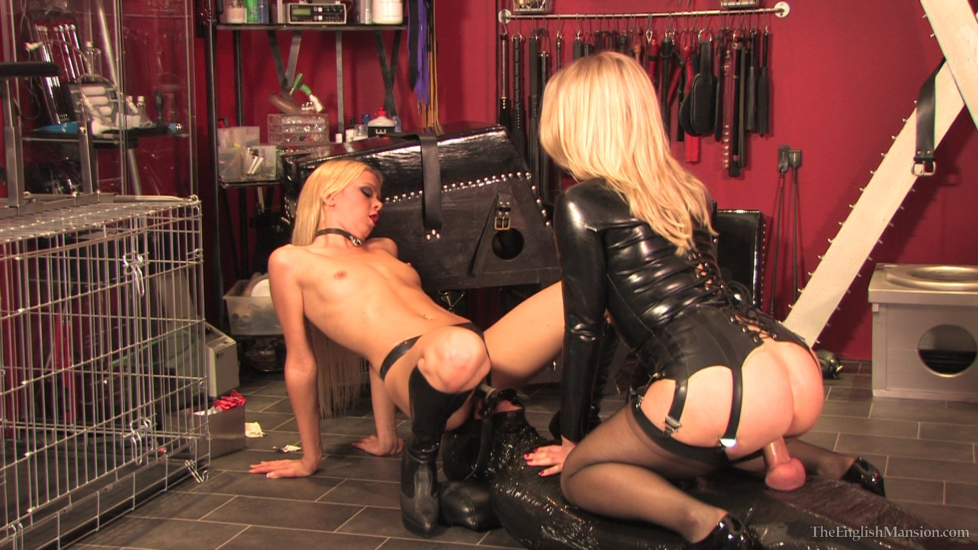 femdom cock and ball torture